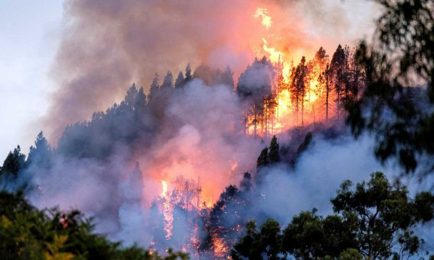 Especial «Apoyo a Gran Canaria»: «Concienciarnos contra los incendios», cuentos de 1º de ESO-B