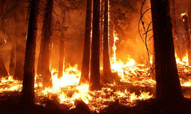 Especial «Apoyo a Gran Canaria», disertación: Incendio=Avaricia